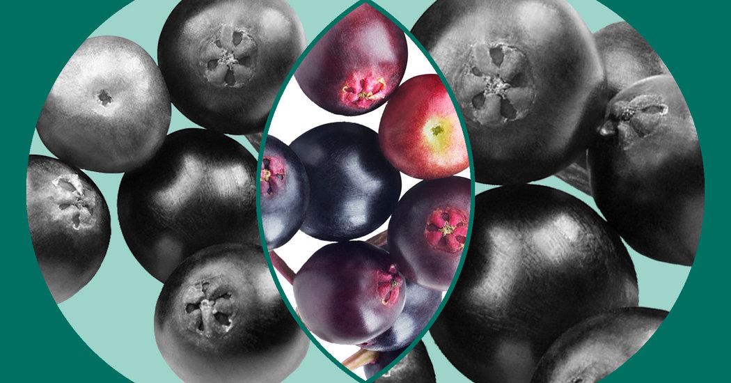 Can Elderberry Treat the Flu?