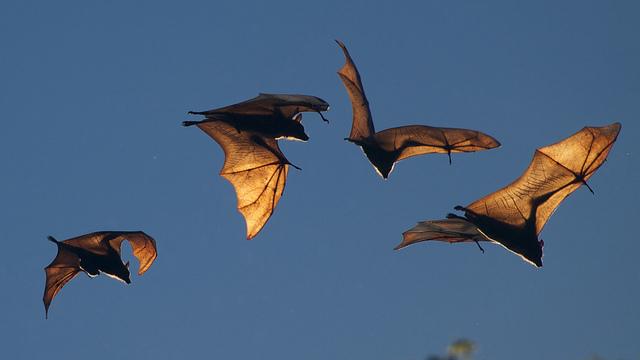 Bats – Live Long and Prosper