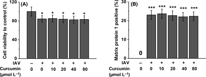 Curcumin alleviates macrophage activation and lung inflammation induced by influenza virus infection through inhibiting the NF‐κB signaling pathway