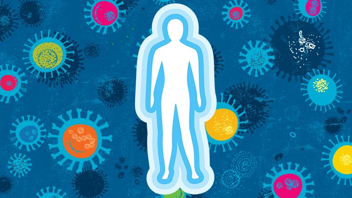 Explained: How Your Immune System Fights Off Coronavirus (and Other Germs)